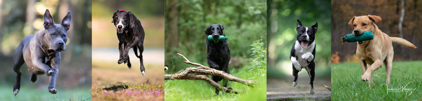 Mini Fotoshoot Hond Keizerfotografie
