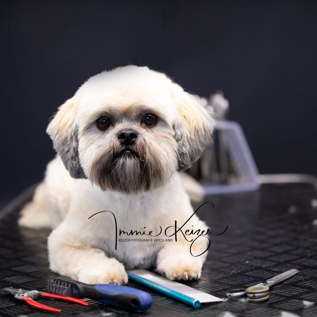 Vachtverzorging hond voor Fotoshoot