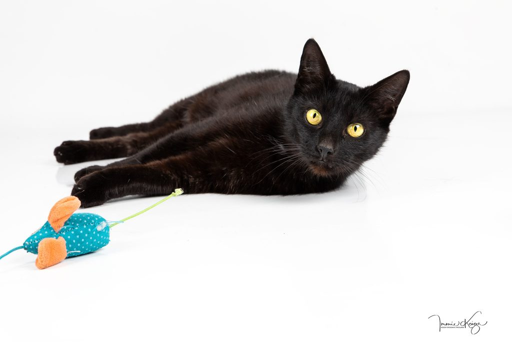 studio fotoshoot zwarte kat