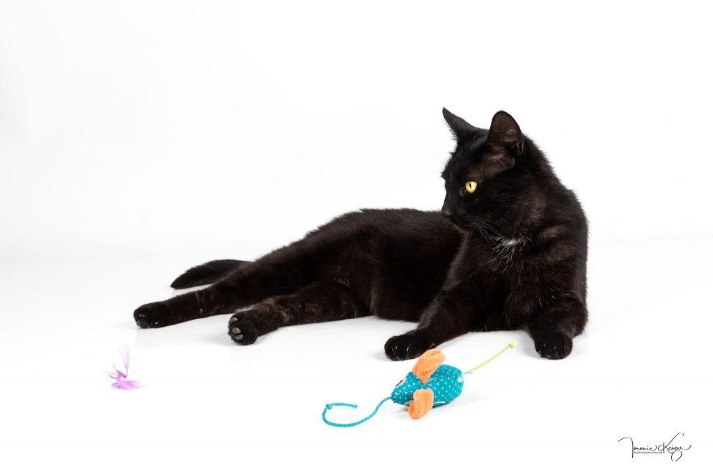 Foto zwarte kat in studio