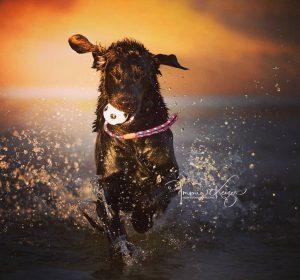 Water actie foto hond