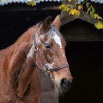 Zerus Boszorg het oudste renpaard van Friesland