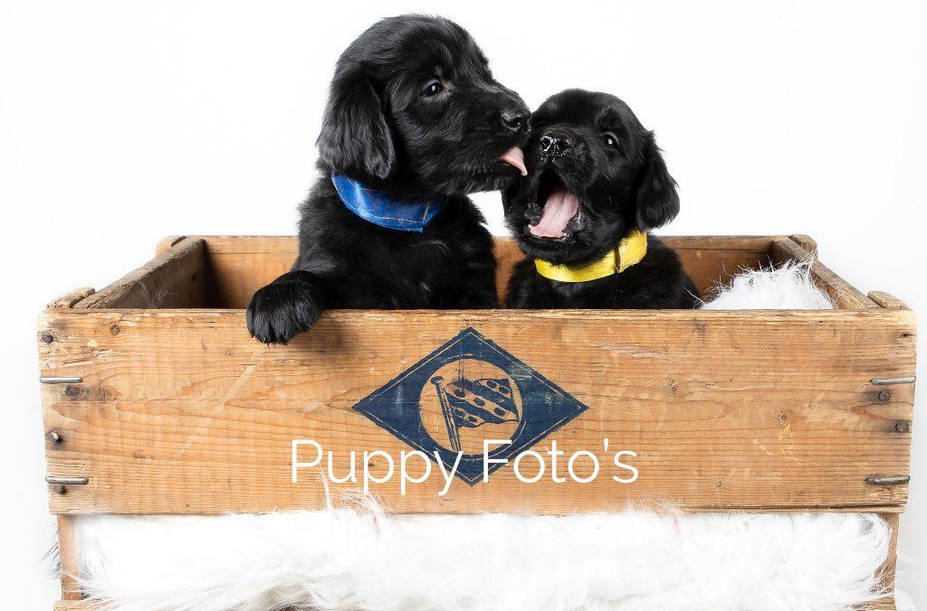 Portfolio-Keizer Honden Fotografie Puppy's