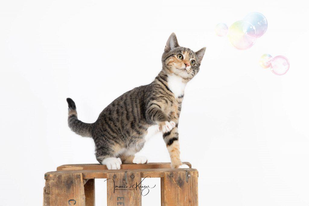 Lapjes kat  Kitten
