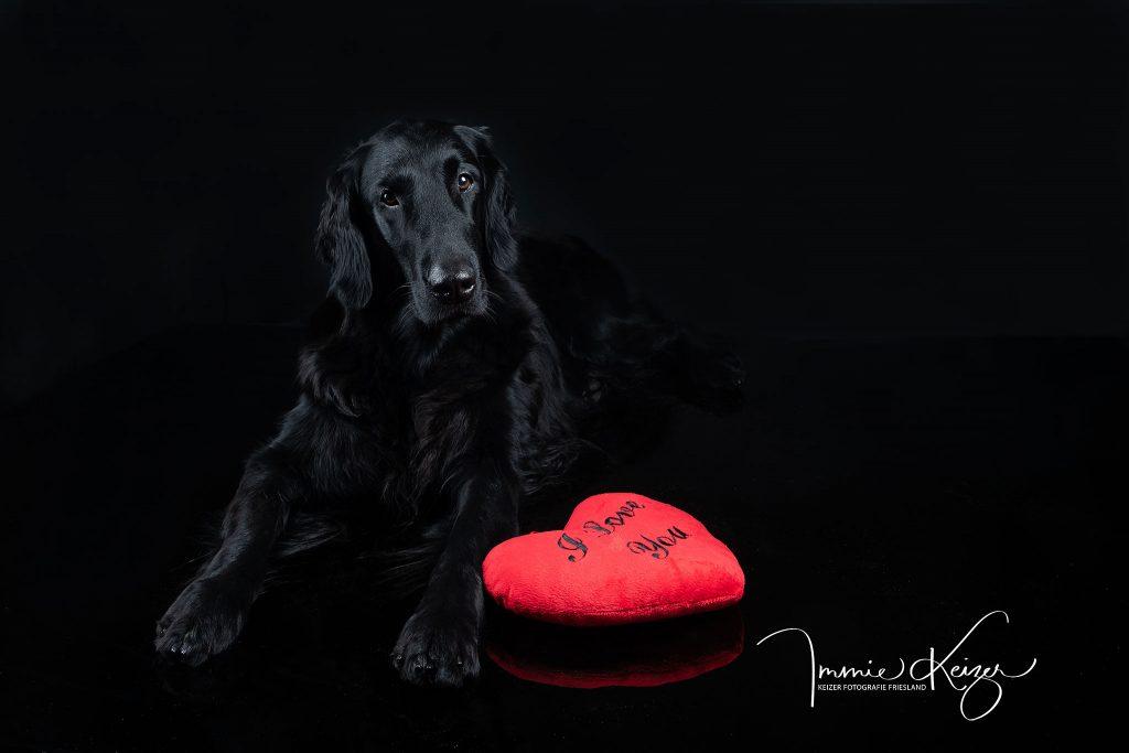 black-foto-hondenportret-valentijn