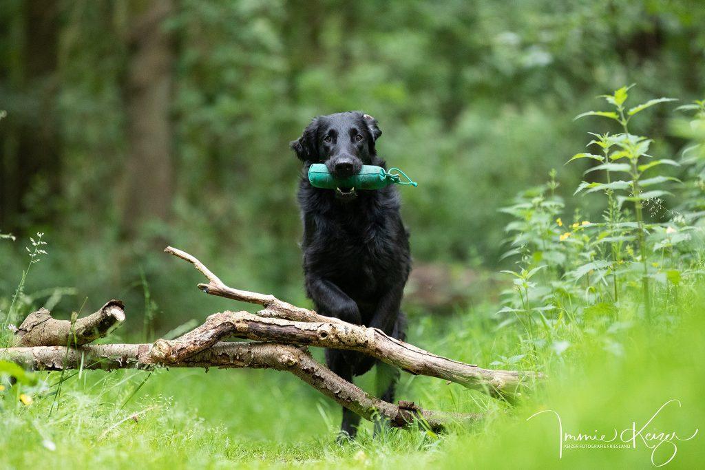 hondenfotograaf-actiefotoshoot-hond
