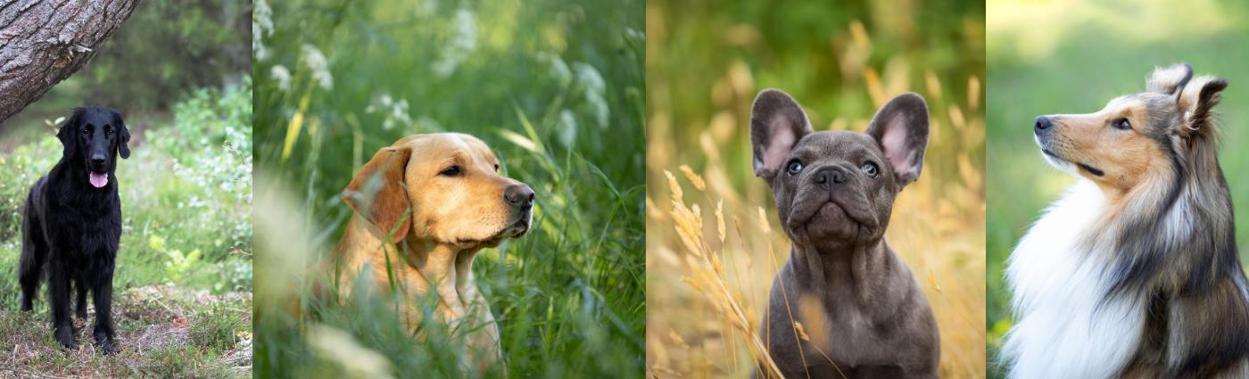 portret fotoshoot hond