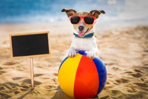 Hiitegolf hond op vakantie
