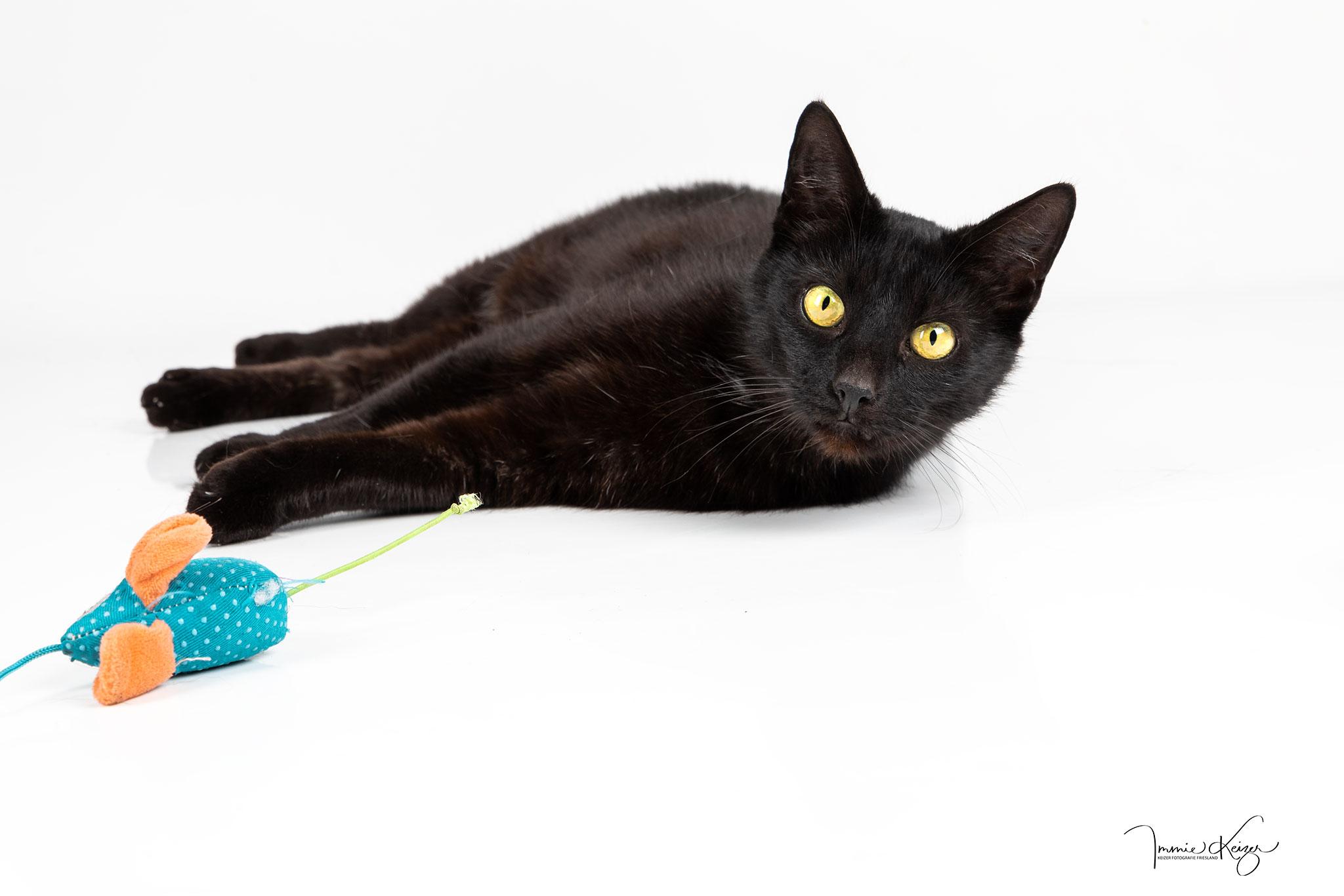 Katten Fotoshoot Portret Studio Keizer Fotografie