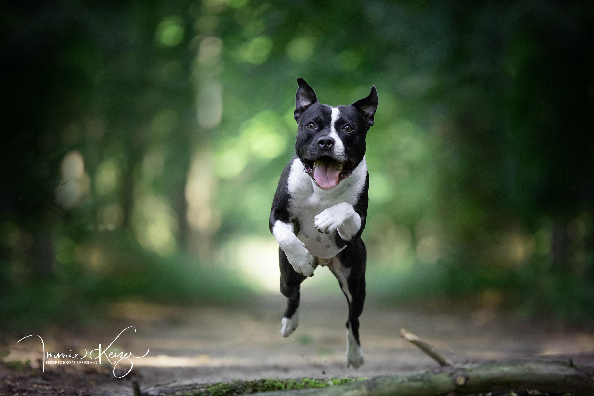Fotoshoot Hond Compleet-Actiefoto Staffors