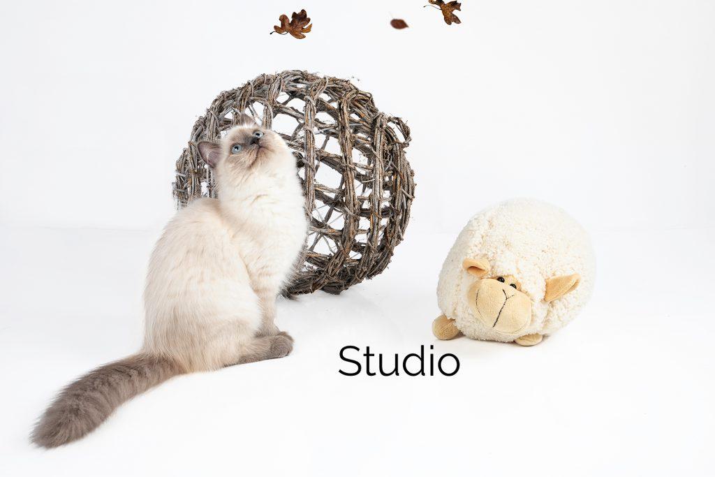 Studio foto Kat Keizer Fotografie
