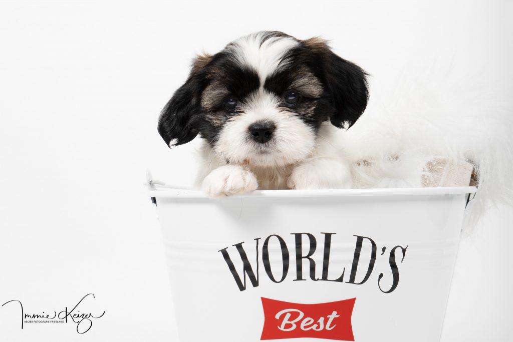 puppy-fotografie-studio